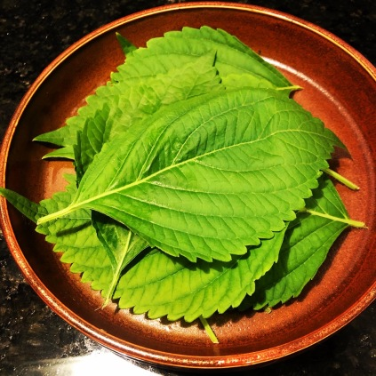 Fresh home grown perilla leaves (plate by Dumpling Hunter)